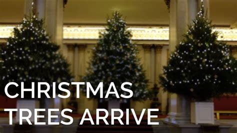 The Christmas Trees have arrived at Buckingham Palace